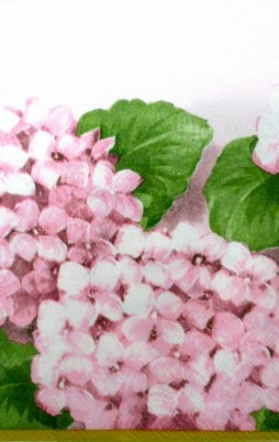 Floral_11011_1.00