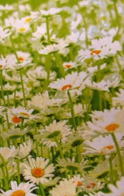 Floral_2009_1.00