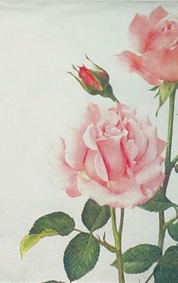 Floral 5007