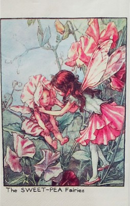 Flower Fairies 5